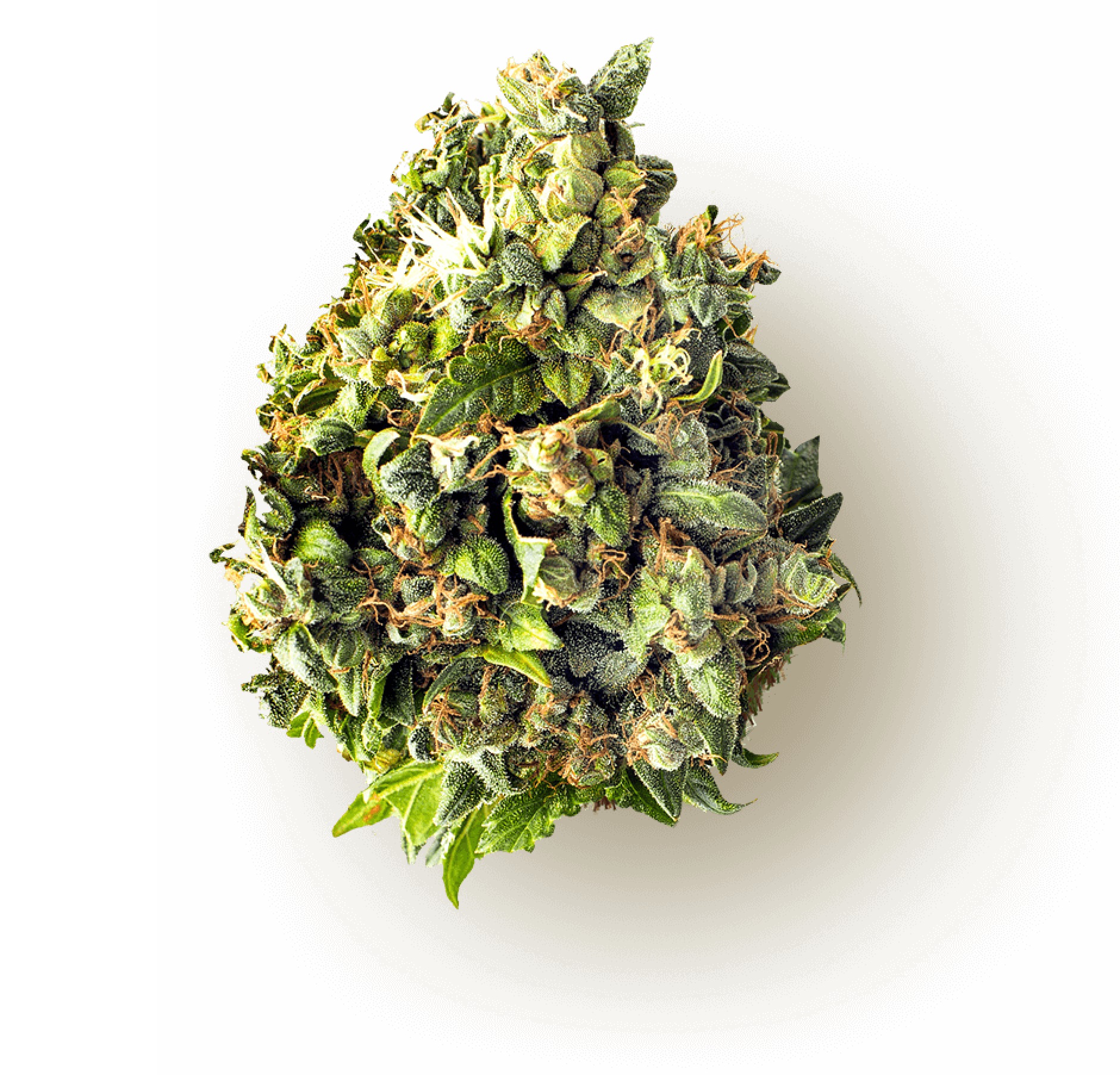 MISTIFI Cannabis Flower