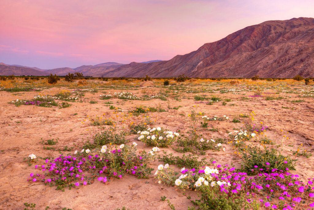 hidden gems in california ananza borrego desert state park