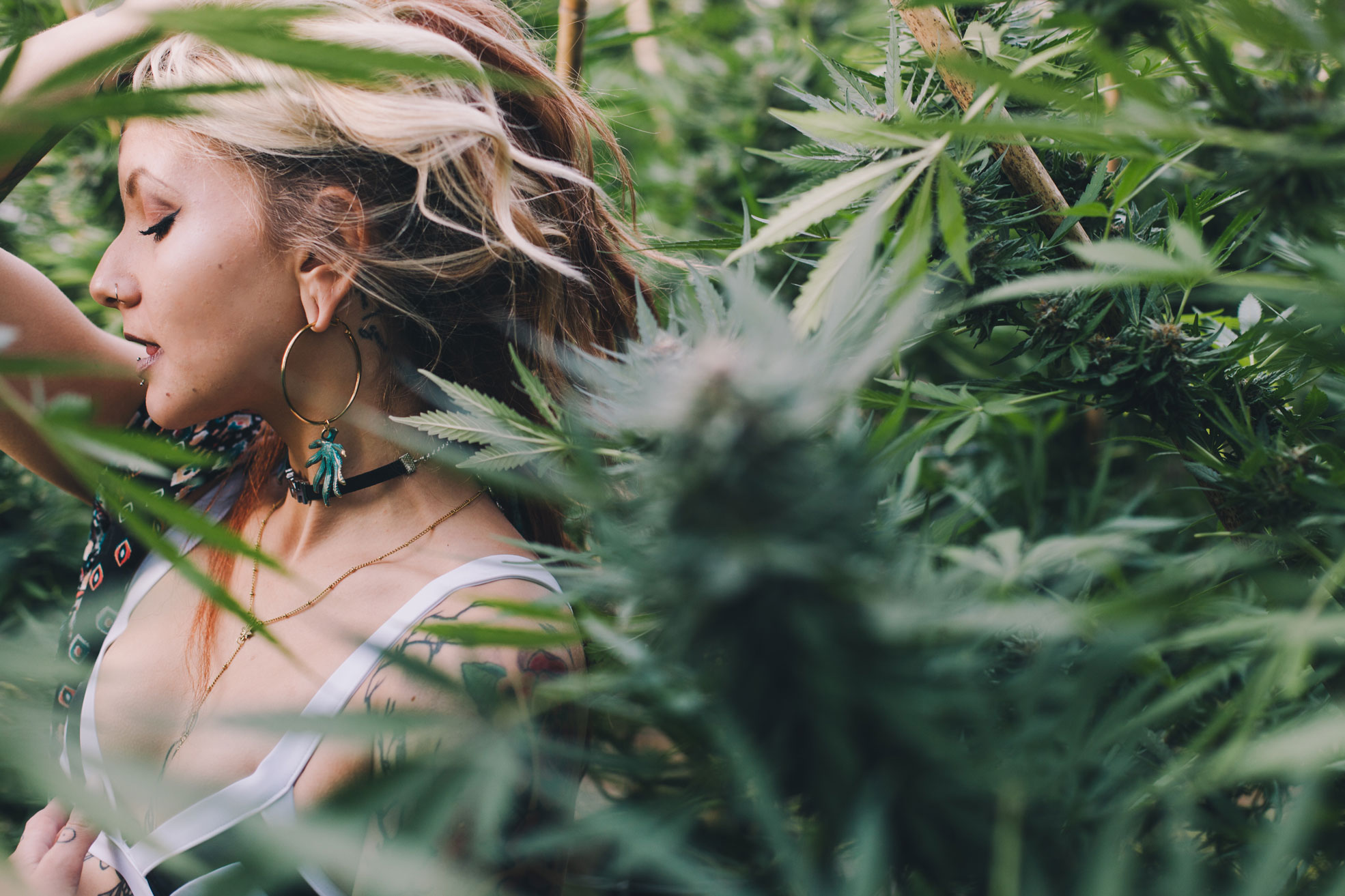 how to be cannabis connoisseur