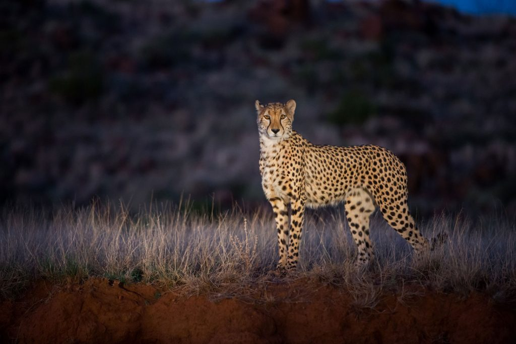 nature documentaries to watch high night on earth