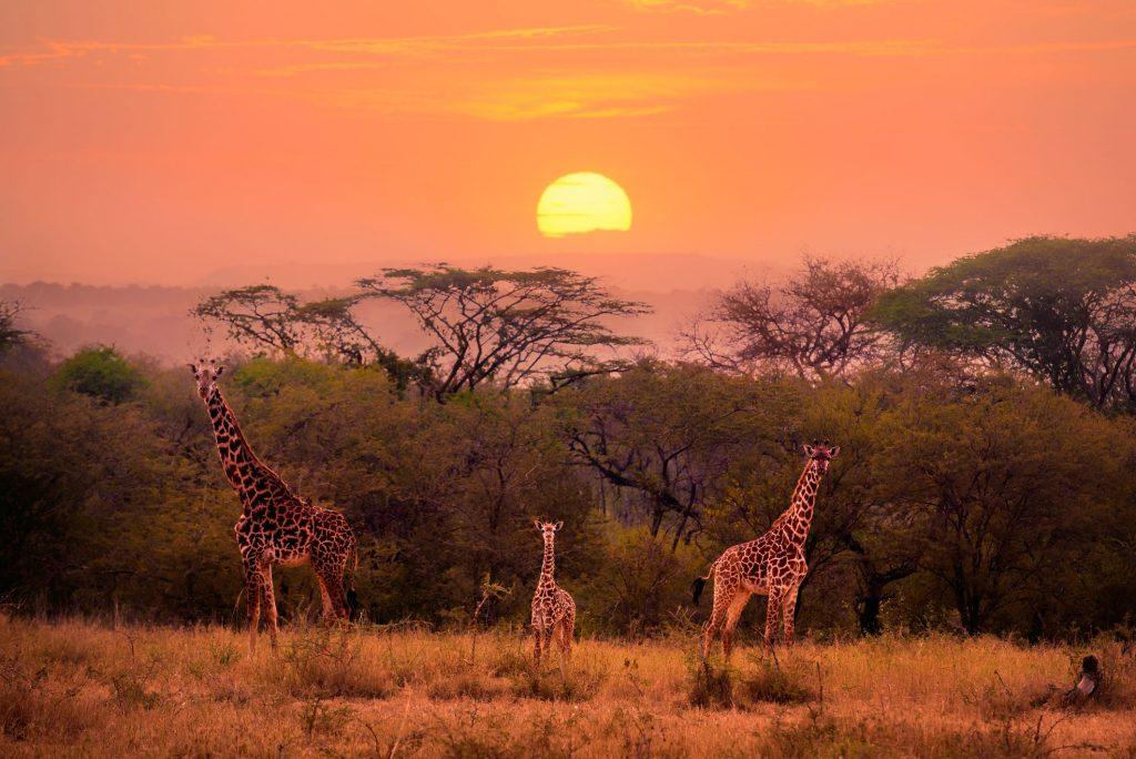 nature documentaries to watch high serengeti